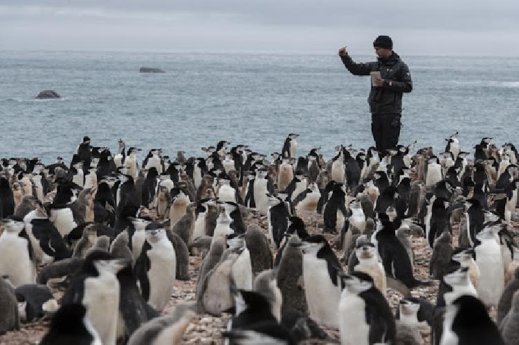 Aparece pingüino color amarillo, sorprende a biólogos (FOTO)