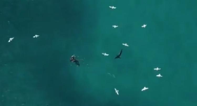 Salvan a buzo antes de ser atacado por un tiburón (VIDEO)