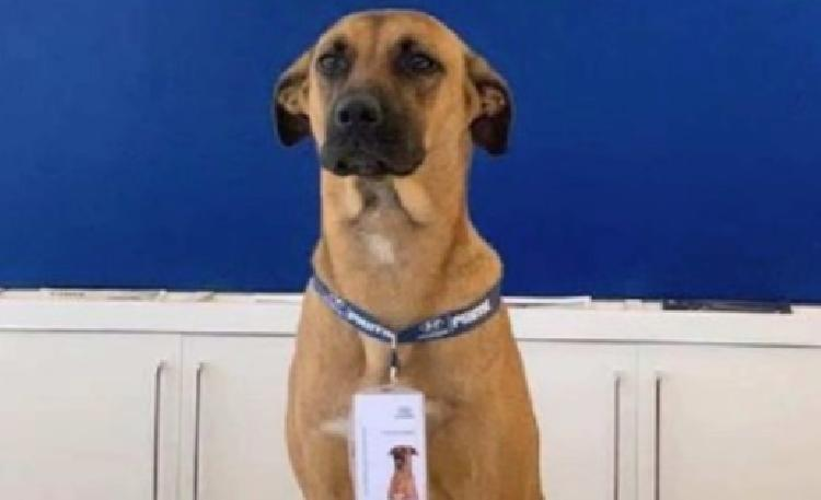Contratan a perrito en agencia de autos y se vuelve viral